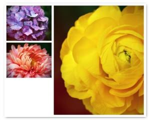 Grandma's Garden Greeting Cards (series 2)-- Set of 3