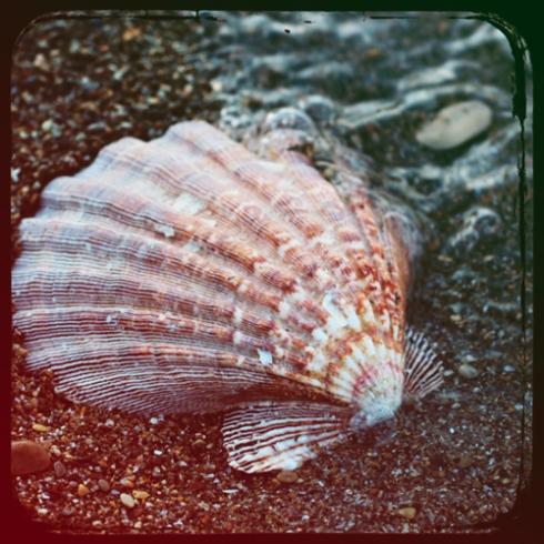 Vintage Seashell 6x6 Fine Art Print