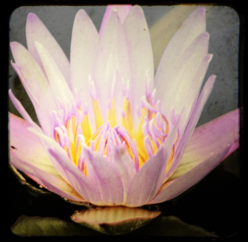 Monet Inspired Water Lily